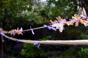 麻糸の束を引っ張って絣くくりの作業中